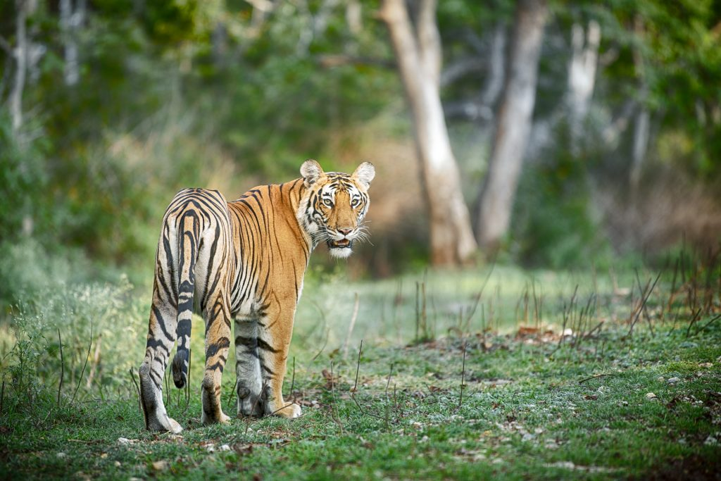 India's Wild Karnataka